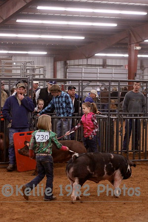 Collin County Livestock Show Swines