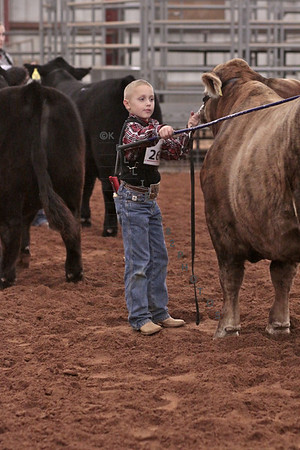 2012 Steers at Collin County Livestock Show
