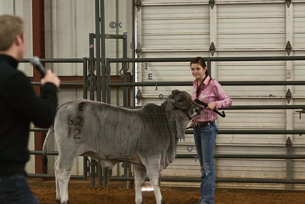 North TX Showdown Heifers Dec. 29,  2012