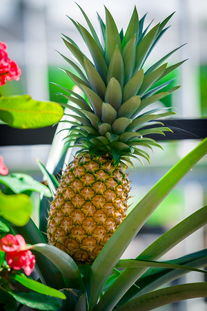 Our Pineapple