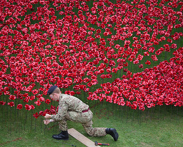Installing Remembrance Poppies