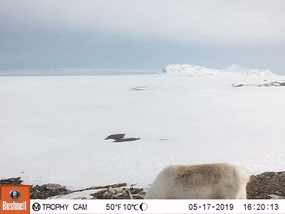 Research pictures – facing West, North, East and South – by four trail cameras on the Field Station | Naturae Observatio | Martin's Eye, placed on the west coast of Forlandsletta on Spitsbergen.