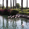 4 -  Surroundings at JW Marriott Resort & Spa in Palm Desert, CA