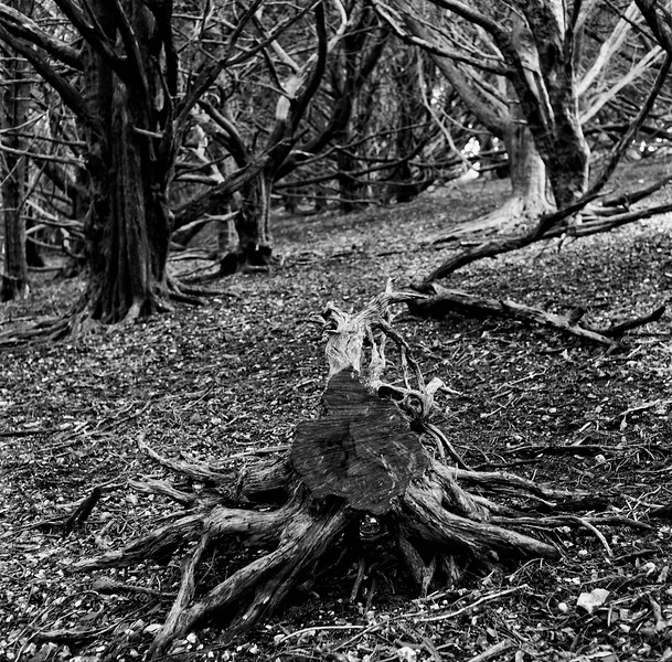 ancient woodland, dorset
