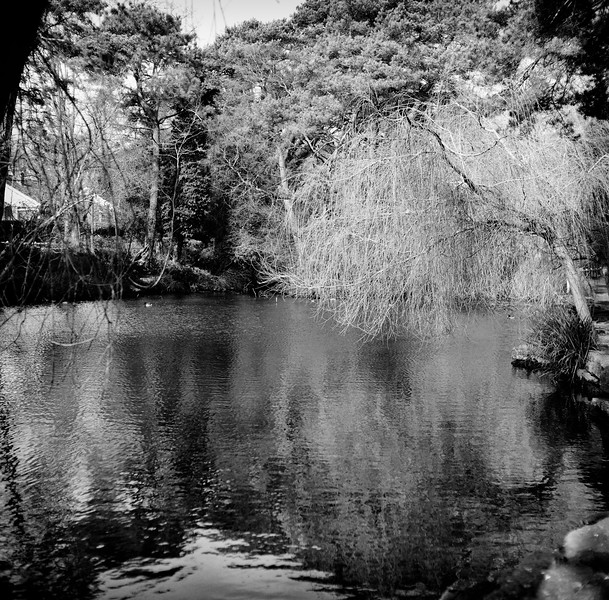 coy pond, bournemouth, dorset