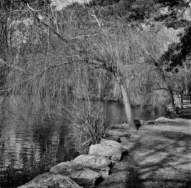 coy pond, bournemouth, dorset