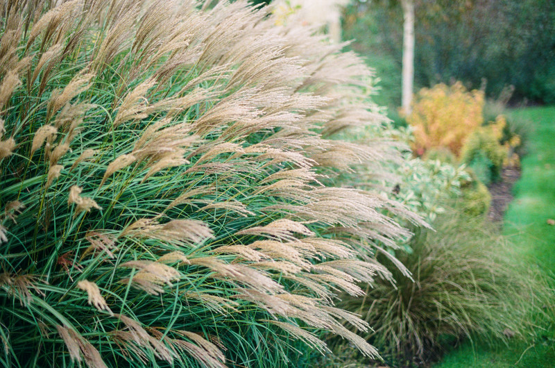 grasses, holme gardens, wareham, dorset