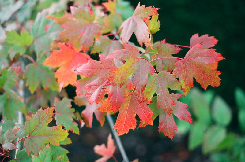 autumn colour, holme gardens, wareham, dorset