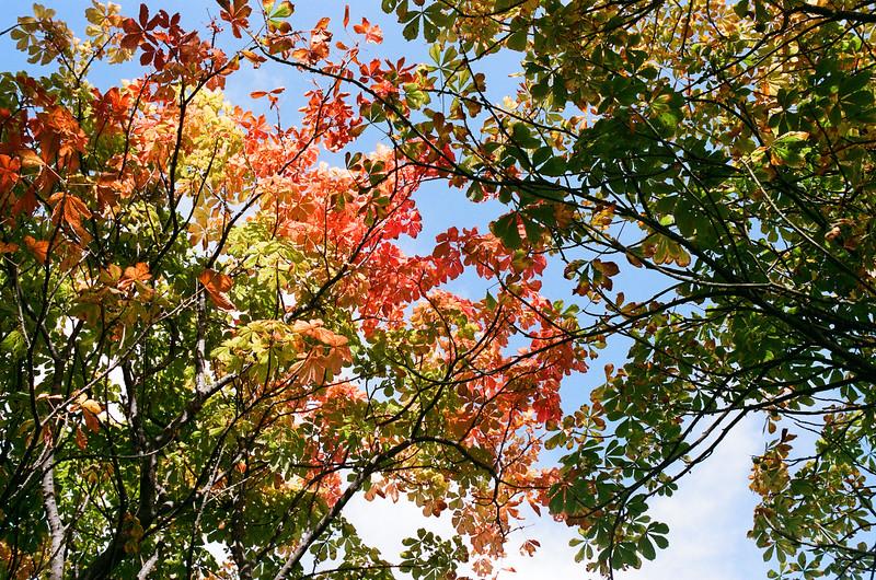 Autumn Colours, Poole Park, Dorset
