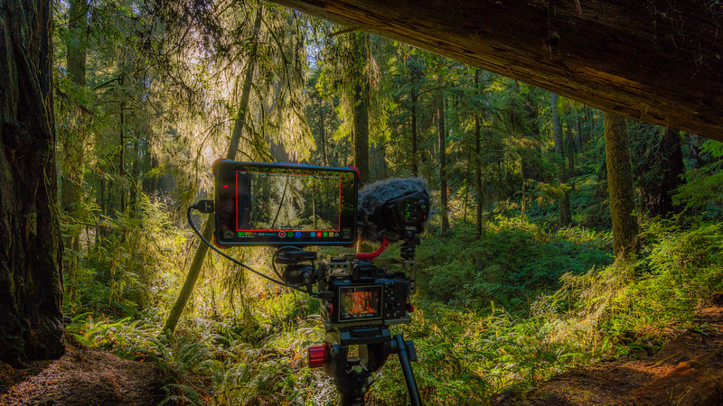 FILMING REDWOOS, SONY A7S2 , ATOMOS INFERNO, RODE VIDEO MIC X