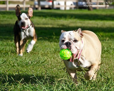 04 IMG_0860 ESTRELLA runs 2 dogs