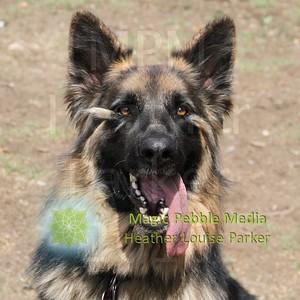 Jesse - Sepulveda Basin Dog Park