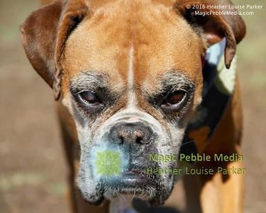 Roxanne2 - Sepulveda Basin Dog Park
