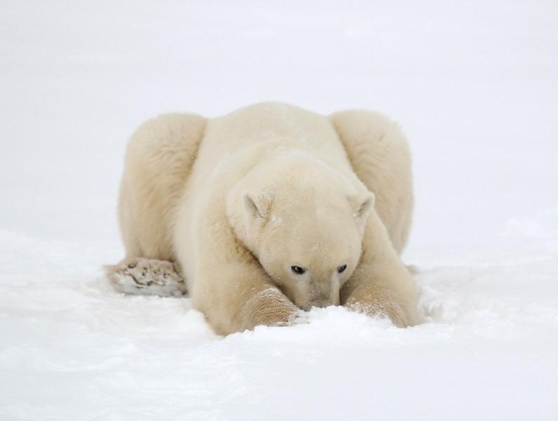 polar000068.jpg