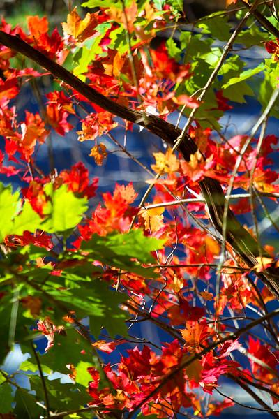 Leaves0027