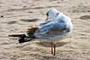 SeagullPreen7328