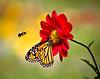 Butterfly&Bee 300dpi-4233