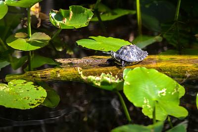 Turtle4515