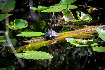 Turtle4507