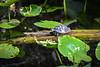 Turtle4512