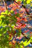 Leaves0024