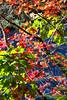 Leaves0029