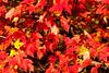 Leaves_4323