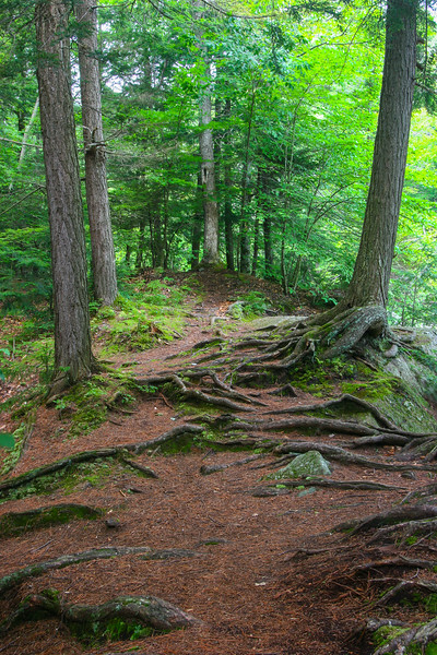 Root path2