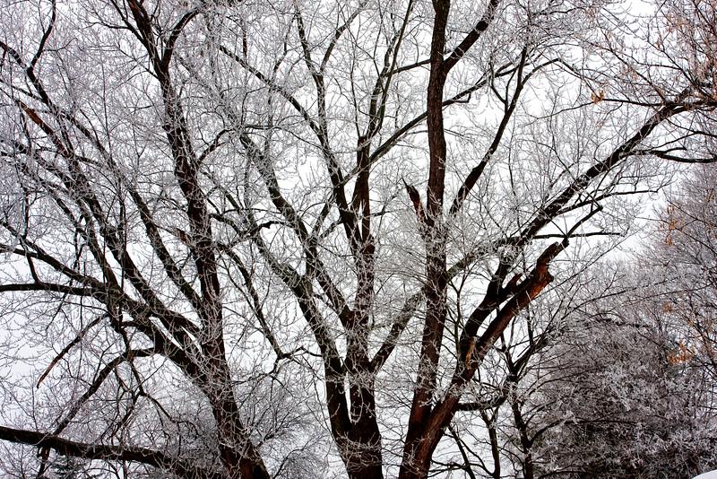 FrozenLimbs0238