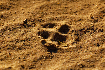 Lynx step