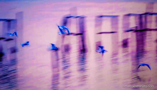 Fly on Purple Light