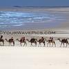 Camels_Birubi Point_2017-02-26_9948A.JPG