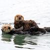 Sea Otters_Morro Bay_2014-06-19_ 9784B.JPG