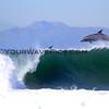 Dolphins_RJ's 2013-4-17_1313.JPG