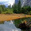 9098_Yosemite Reflections.JPGYosemite Reflections_2013-09-21_9098 Vert.JPG