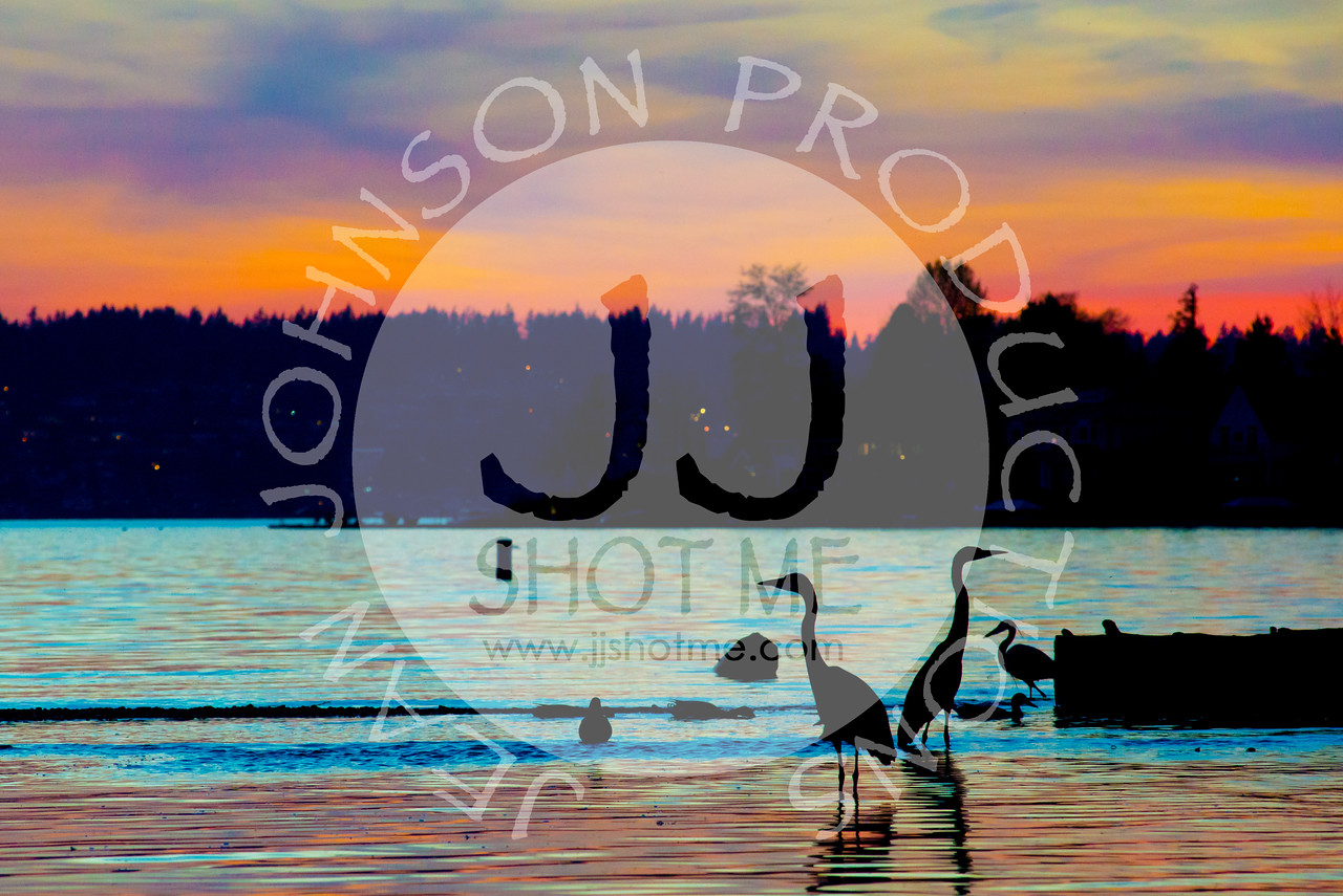 jjshotme-HeronSunset-5805
