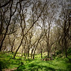Forêt du Maïdo