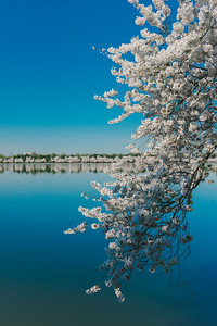 Tidal Basin - Washington, DC