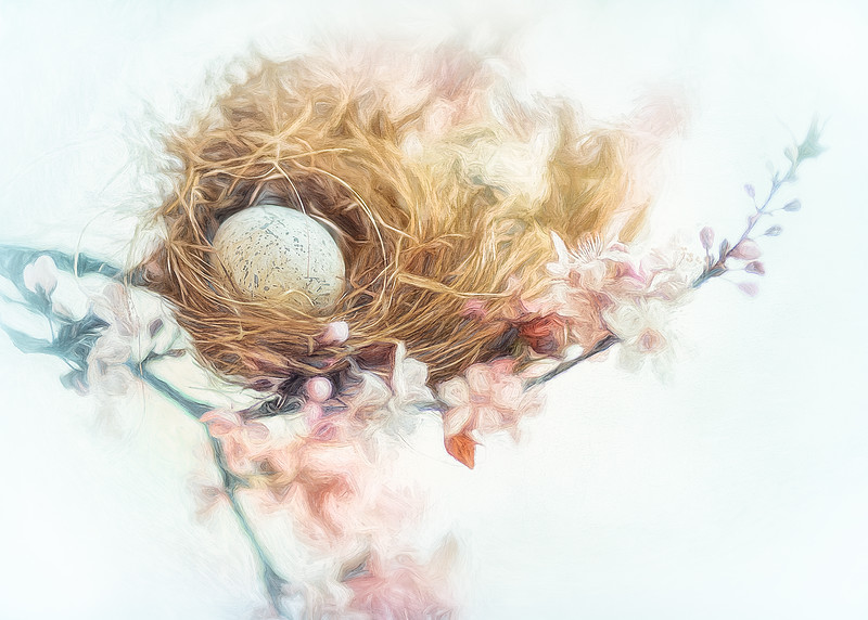 A Nest In Spring
