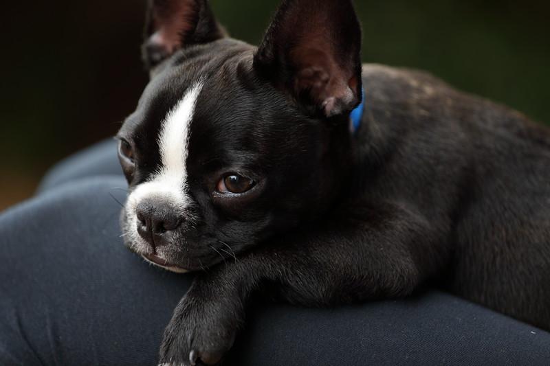 Finnegan Resting