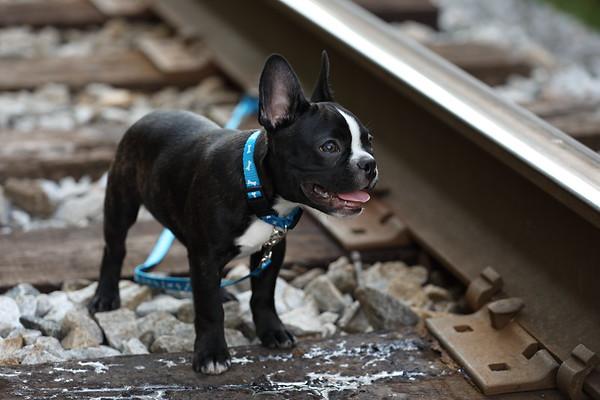 Finnegan on Tracks at Bostian Bridge Shoot