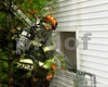 At approximately 12:15pm this afternoon, the McHenry Township Fire Protection District responded to a report of smoke in the house AT 201 Oakton Court in McHenry. Companies quickly arrived to find smoke coming from the open front door of the occupied 2 story, single family dwelling. <br /> <br /> Two engine companies along with an ambulance crew entered the residence to commence an interior attack on the fire. Once inside, crews discovered that the floor leading to the stairwell had burned through. With this discovery, crews then entered the second floor from the exterior via a ladder to continue searching for any victims and fire extension. After several minutes, the fire was under control and there was confirmation that no one was in the building.  <br /> <br /> Investigators from the McHenry Township Fire Protection District and McHenry Police remained on the scene to determine the cause of the fire. At the time of this release, the estimate of damage was unknown. COPYRIGHT 2018 WMS PHOTOGRAPHY