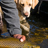 Fishing Dog Photos - Jim Klug Photos