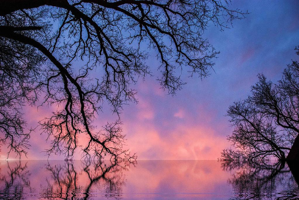 Oak and Cloud Sunset Lake