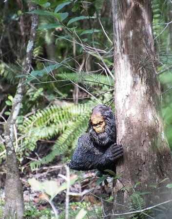 Florida Skunk Ape