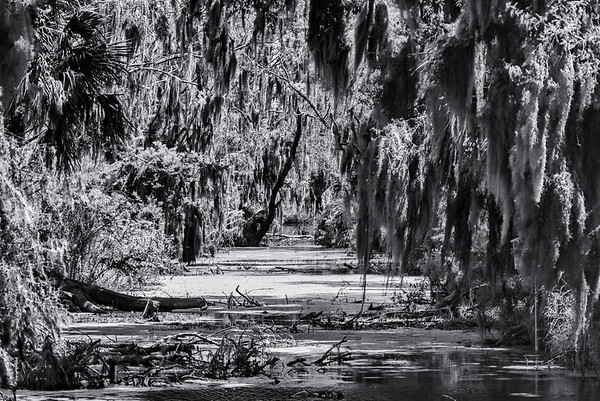 Swamp1BW