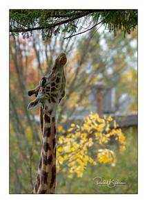 granby_zoo-1DMarkIV-181013-4553-framed and sig