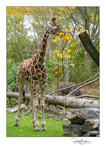granby_zoo-1DMarkIV-181013-4609-framed and sig
