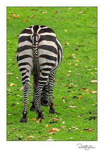 granby_zoo-1DMarkIV-181013-4576-framed and sig
