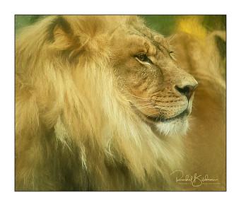 granby_zoo-1DMarkIV-181013-4929-impressions-framed and sig